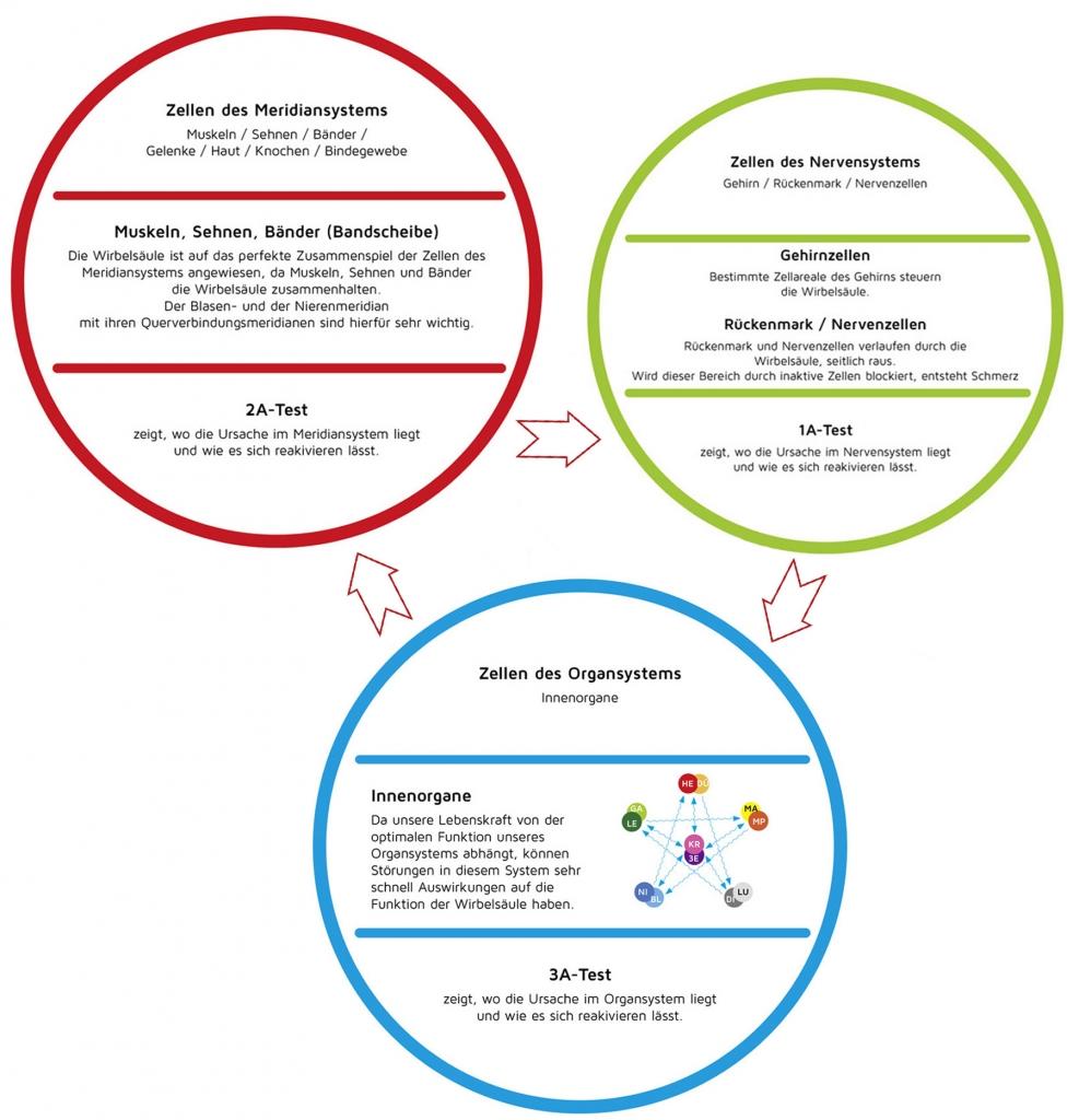 Bildliche Darstellung des Theralogy Konzepts Seite 2
